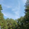 Hideaway in Trees