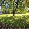 Quiet, Grass, Trees, Private