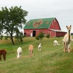 Hipcamper Heritage Farm
