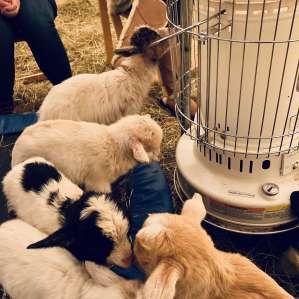 Mariaville Goat Farm Yurt Mariaville Goat Farm Yurt Ny 12 Hipcamper Reviews And 18 Photos