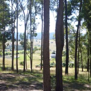 Gillies Ridge