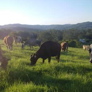 Benmar Farm