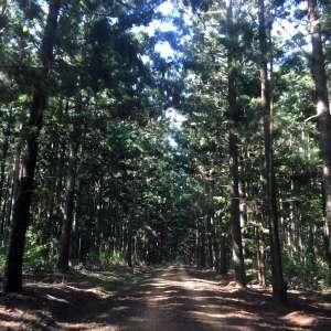 Behind The Pines Kalpowar
