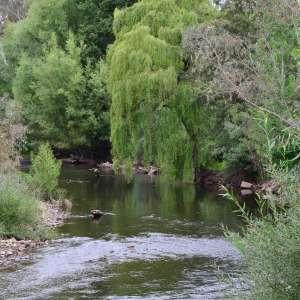Riverside King Valley