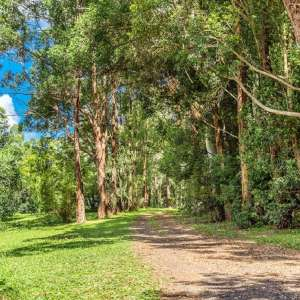 Byron Hinterland Eco Camp