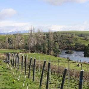 Ryelands Farm & Vineyard