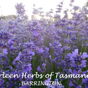 Marleen Herbs of Tasmania