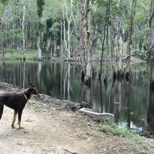 Wallaby Retreat