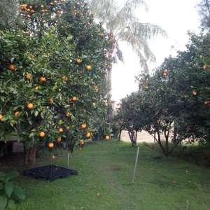 Nimbin Farm 101
