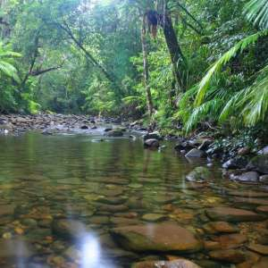 Jack's Place Daintree