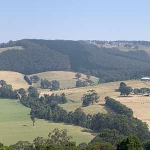 Tarra Bulga Views