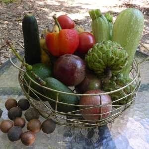 Leichhardt Creek Organic Farm