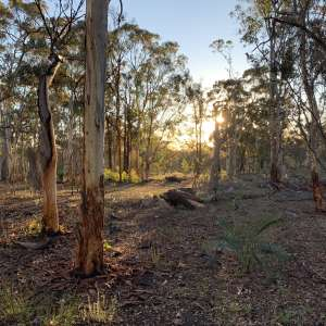 Wandoo Woodland Bush Camp