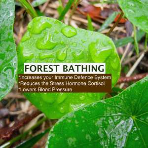 Holistic Forest Bathing Retreat