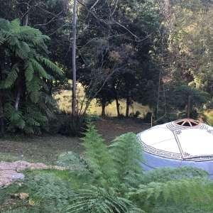 Purlingbrook Falls Gwongorella