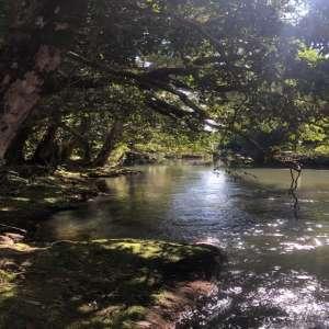 Mena Creek River Retreat Camp