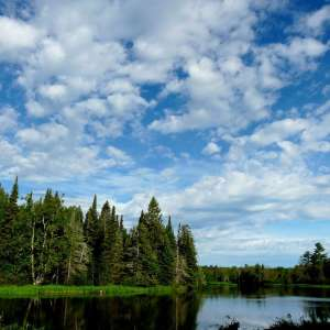 Huron-Manistee National Forests