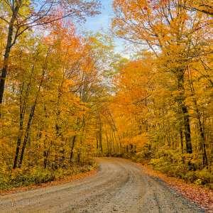 Pillsbury State Forest