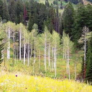 Targhee National Forest
