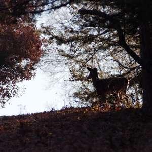 E.T. Mahoney State Park