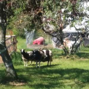 Mitchell Family Farms