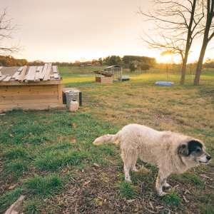 Green Mountain Farm