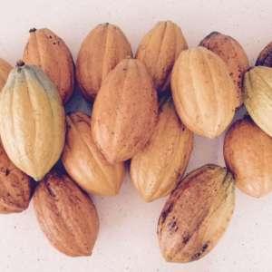 Cacao Agroforrestry Farm