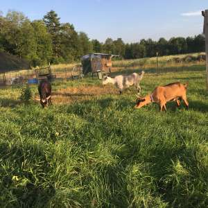 Howling Goat Farm and Grange