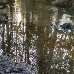 Dennis & Melissa's Hidden Creek