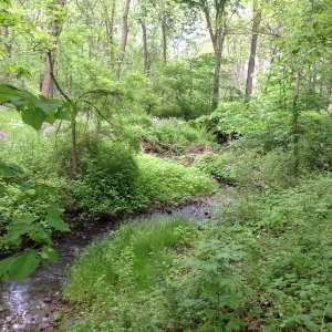 Spring Creek Farm