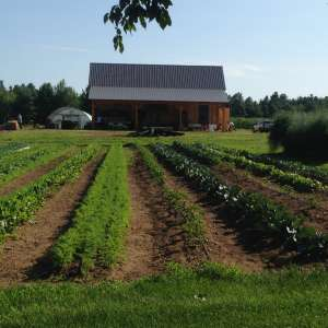 Shady Grove Farm and Wellness Center