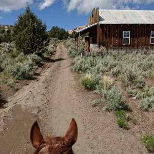 Old yella dog ranch.