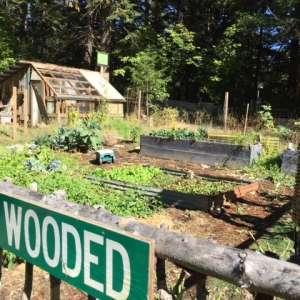 Lost Woods Croft
