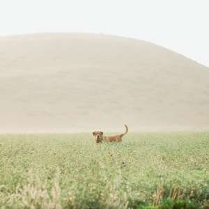 Montana Country & Stone Barns