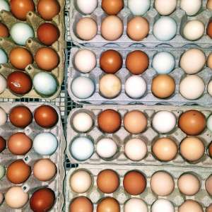 Sonoran Homestead Egg Farm