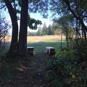 Magical Amphitheater Camping