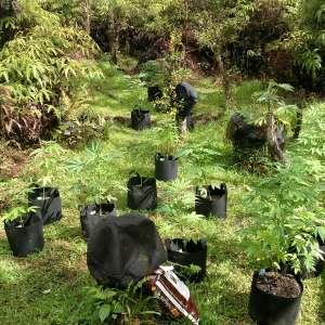 Treehouse Cannabis Farm