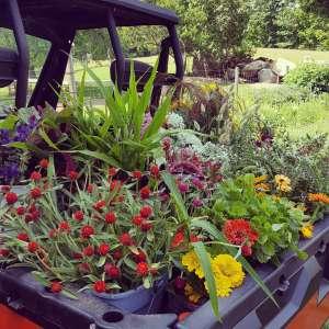 Working Flower Farm