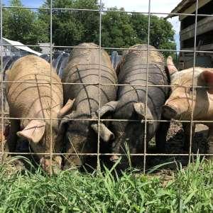 Willow City Farm