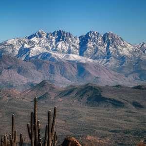 Cactus Rose Ranch