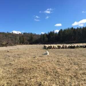Skyelark Ranch
