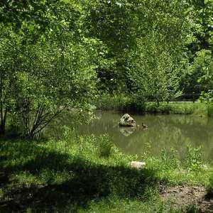 Kinderhook Hollow Ponds/Brook