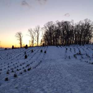 Christmas Tree Farm with Views