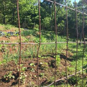 Piedmont farm