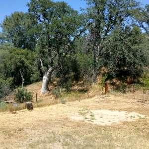 Havilah Pines homestead