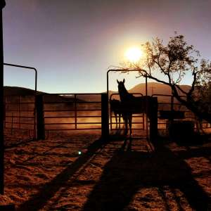 Southern Arizona Guest Ranch