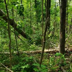 Swamp Grass Lane