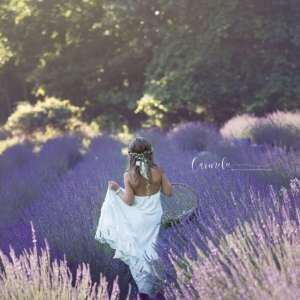 Pleasant Valley Lavender