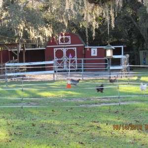 Casey's Healing Hooves Farm