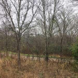Southern Walnut Creek Camp
